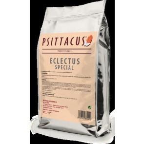 Psittacus Eclectus special - Edelpapegaaien 5kg