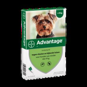 Advantage Hond 250 10 Tot 25 Kg 4 pipet